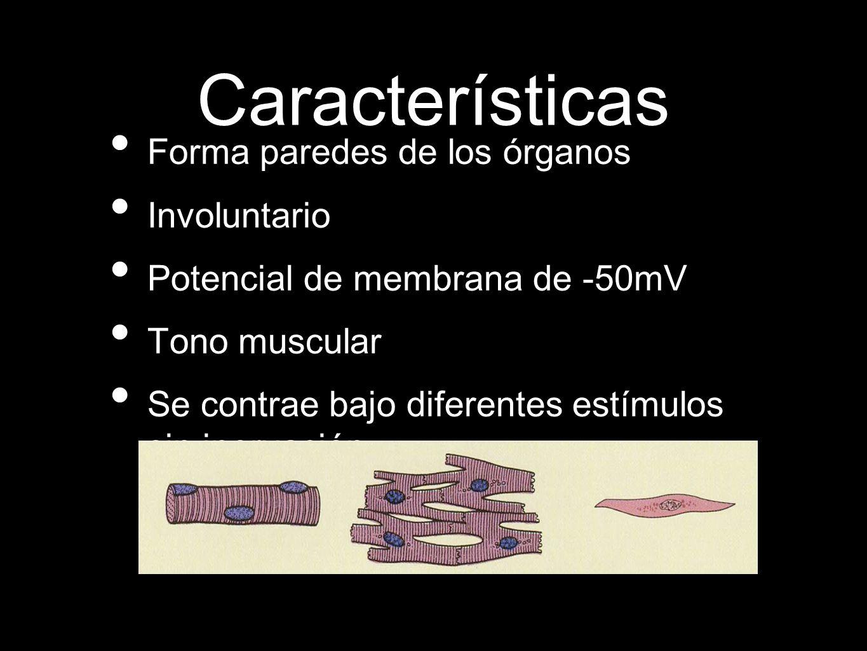 Características Forma paredes de los órganos Involuntario Potencial de membrana de -50mV Tono muscular Se contrae bajo diferentes estímulos sin inervación