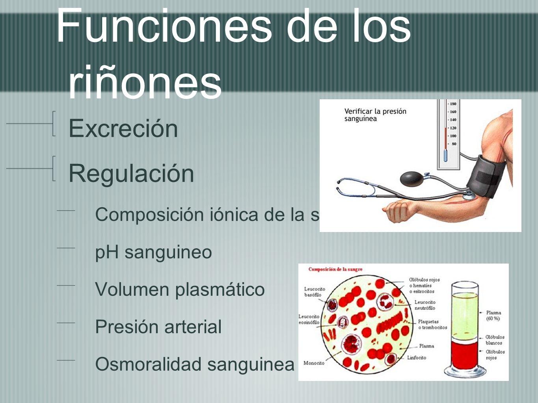 Funciones de los riñones Excreción Regulación Composición iónica de la sangre pH sanguineo Volumen plasmático Presión arterial Osmoralidad sanguinea