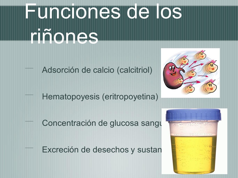 Funciones de los riñones Adsorción de calcio (calcitriol) Hematopoyesis (eritropoyetina) Concentración de glucosa sanguinea Excreción de desechos y su