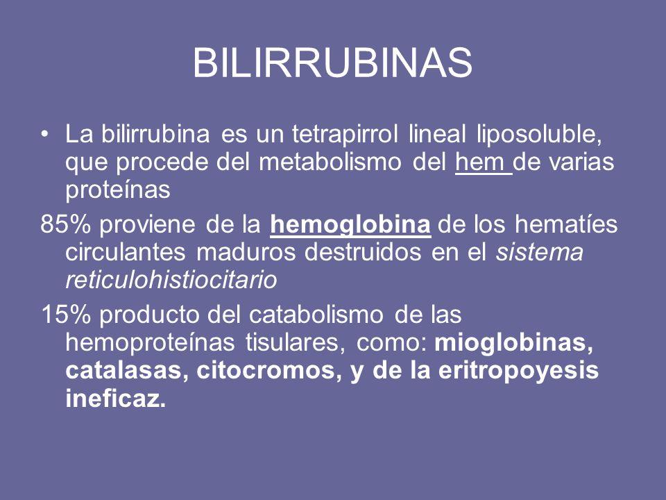 BILIRRUBINAS La bilirrubina es un tetrapirrol lineal liposoluble, que procede del metabolismo del hem de varias proteínas 85% proviene de la hemoglobi