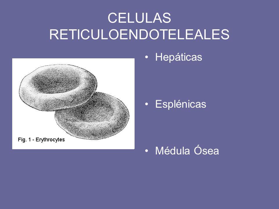 Hepáticas Esplénicas Médula Ósea CELULAS RETICULOENDOTELEALES