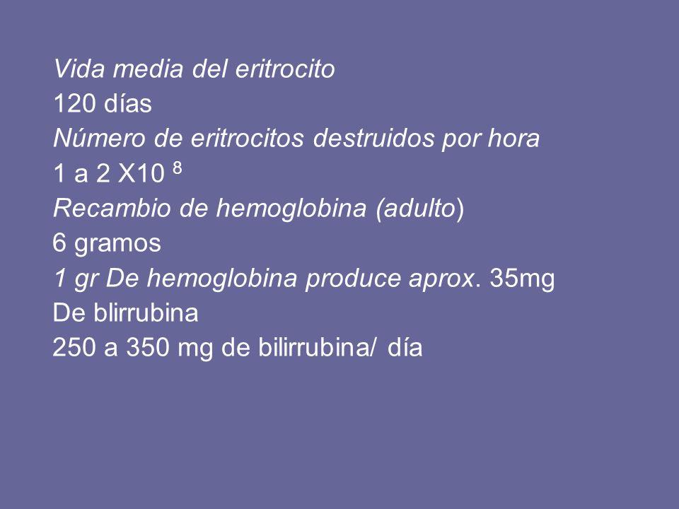 Vida media del eritrocito 120 días Número de eritrocitos destruidos por hora 1 a 2 X10 8 Recambio de hemoglobina (adulto) 6 gramos 1 gr De hemoglobina