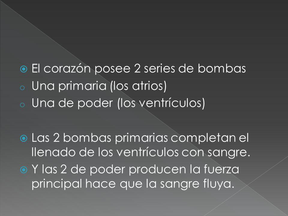 El corazón posee 2 series de bombas o Una primaria (los atrios) o Una de poder (los ventrículos) Las 2 bombas primarias completan el llenado de los ve