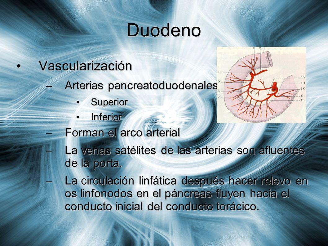 Duodeno Vascularización Vascularización – Arterias pancreatoduodenales: Superior Superior Inferior Inferior – Forman el arco arterial – La venas satél