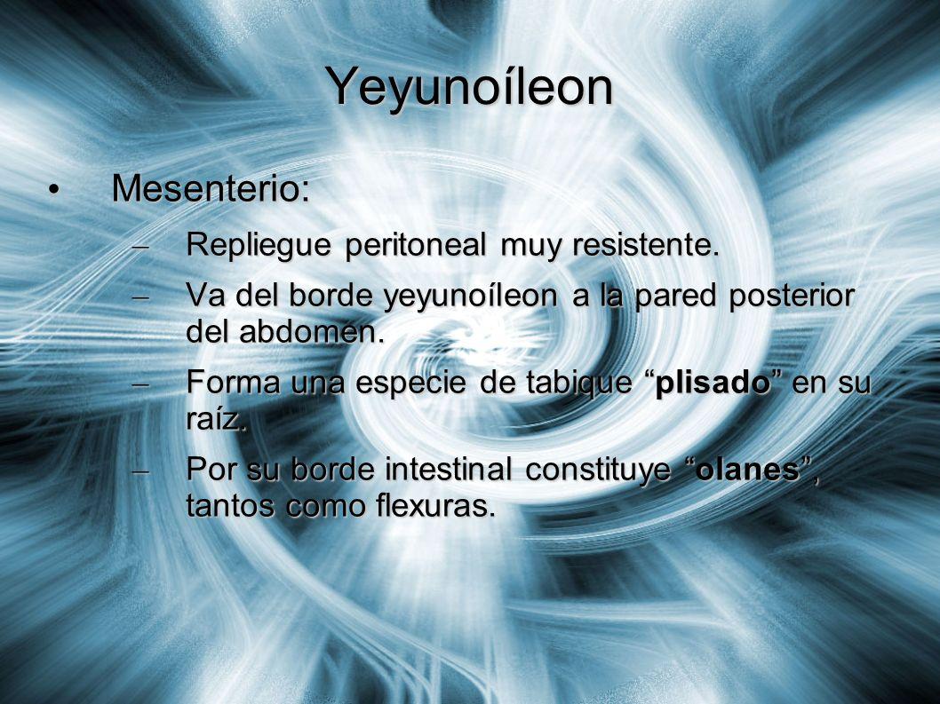 Yeyunoíleon Mesenterio: Mesenterio: – Repliegue peritoneal muy resistente. – Va del borde yeyunoíleon a la pared posterior del abdomen. – Forma una es