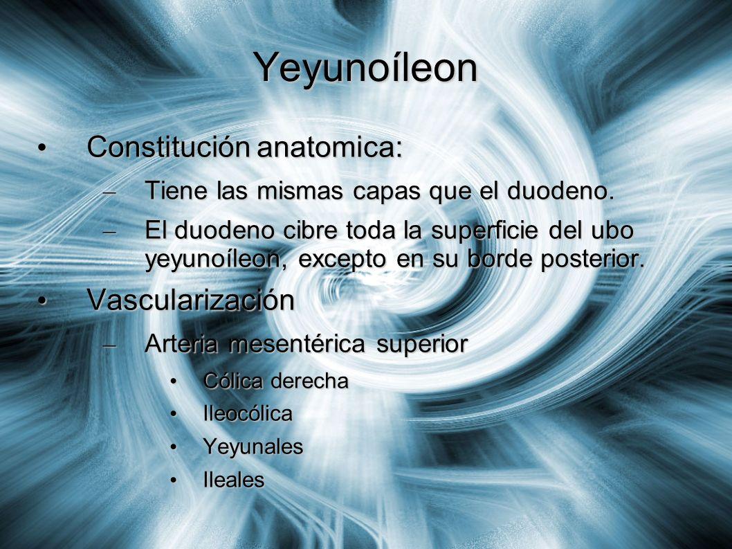 Yeyunoíleon Constitución anatomica: Constitución anatomica: – Tiene las mismas capas que el duodeno. – El duodeno cibre toda la superficie del ubo yey