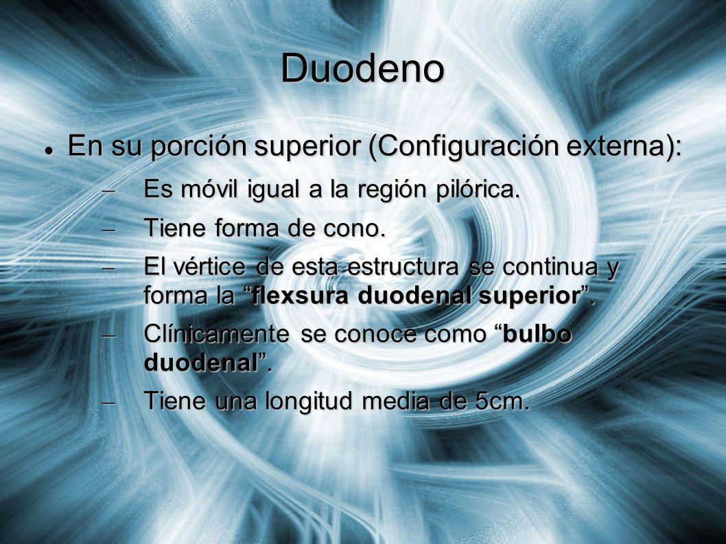 Duodeno En su porción superior (Configuración externa): En su porción superior (Configuración externa): – Es móvil igual a la región pilórica. – Tiene