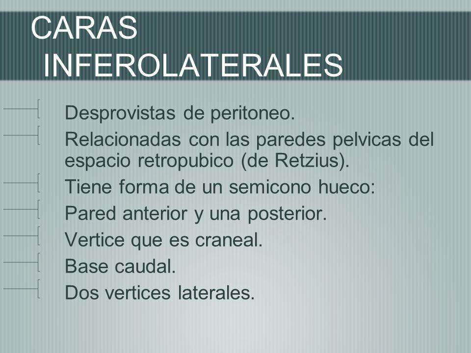 CARAS INFEROLATERALES Desprovistas de peritoneo. Relacionadas con las paredes pelvicas del espacio retropubico (de Retzius). Tiene forma de un semicon