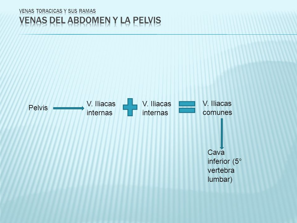 Pelvis V. Iliacas internas V. Iliacas comunes Cava inferior (5° vertebra lumbar)