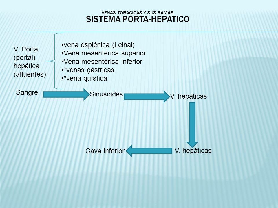 VENAS TORACICAS Y SUS RAMAS SISTEMA PORTA-HEPATICO Sangre Sinusoides V. hepáticas Cava inferior V. Porta (portal) hepática (afluentes) vena esplénica
