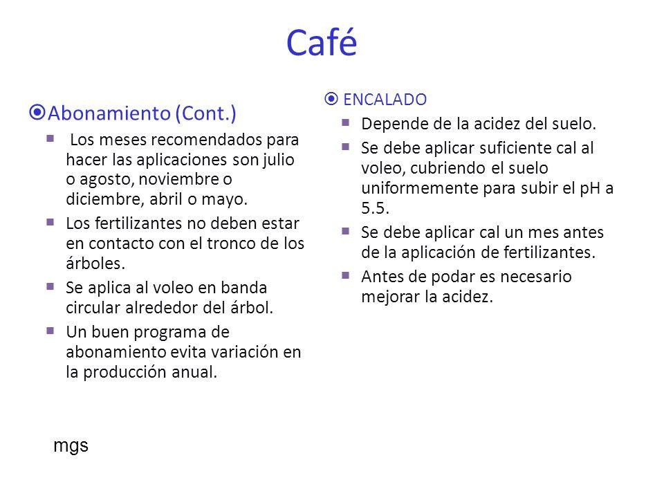 Síntomas comunes de deficiencias nutricionales en las hojas del cafeto en Puerto Rico.