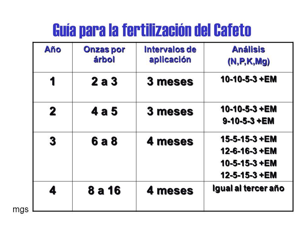 Guía para la fertilización del Cafeto Año Onzas por árbol Intervalos de aplicación Análisis(N,P,K,Mg) 1 2 a 3 3 meses 10-10-5-3 +EM 2 4 a 5 3 meses 10