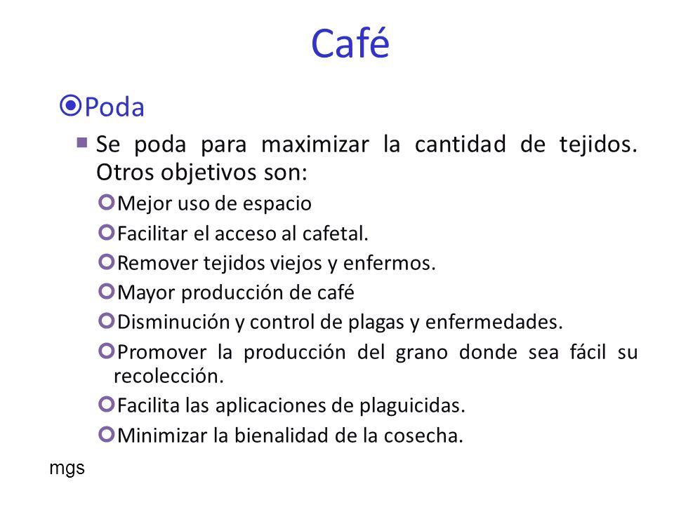 Café Malezas Las malezas que se controlen mecánicamente y otros mecanismos debe cuidar no lastimar los troncos.