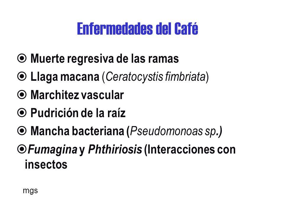 Nemátodos- Café Estos organismos atacan las raíces jóvenes afectando la absorción de agua y minerales.