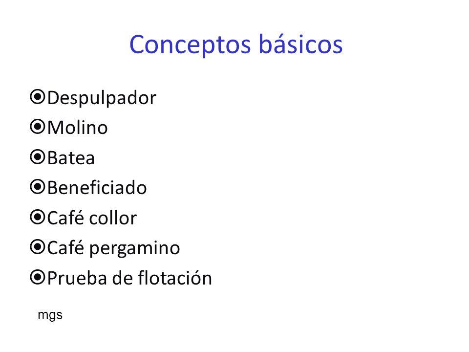 Conceptos básicos Despulpador Molino Batea Beneficiado Café collor Café pergamino Prueba de flotación mgs