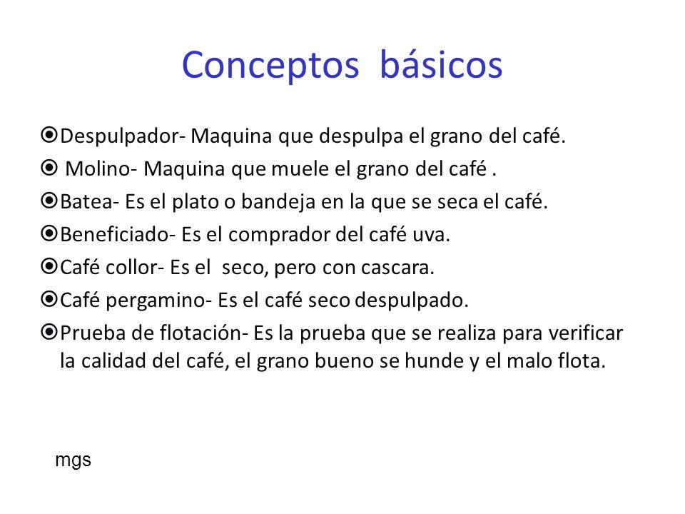 Conceptos básicos La zona de mayor producción de café en Puerto Rico es en la zona oeste central.
