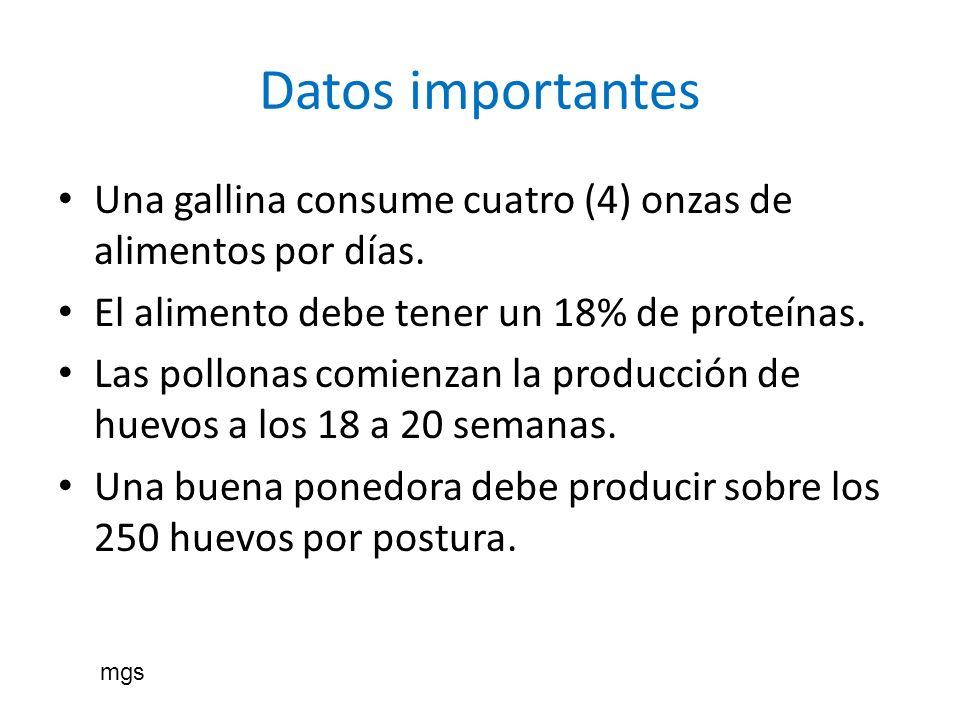 Datos importantes Una gallina consume cuatro (4) onzas de alimentos por días. El alimento debe tener un 18% de proteínas. Las pollonas comienzan la pr