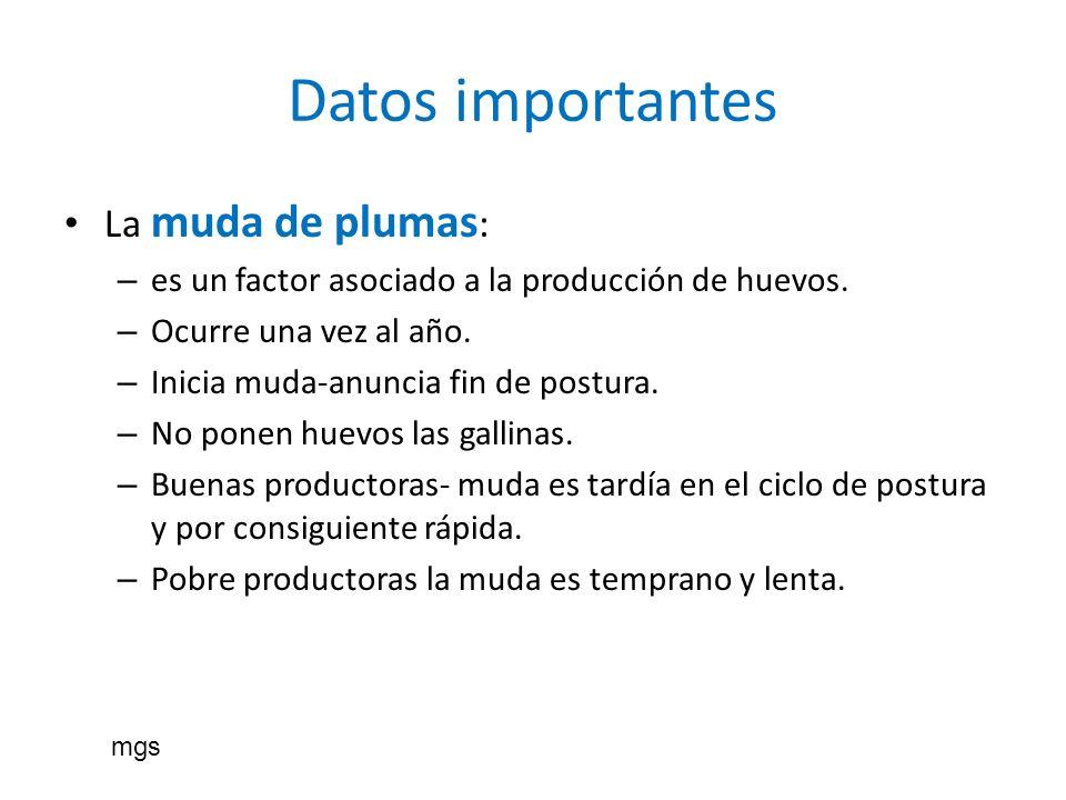 Datos importantes La muda de plumas : – es un factor asociado a la producción de huevos. – Ocurre una vez al año. – Inicia muda-anuncia fin de postura