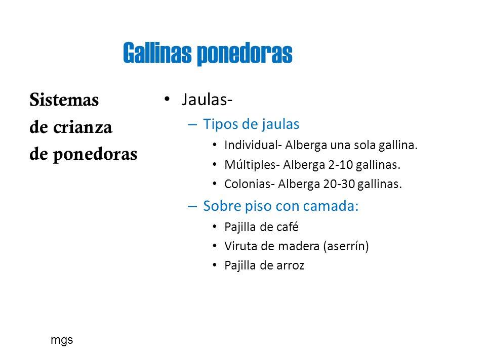 Gallinas ponedoras Sistemas de crianza de ponedoras Jaulas- – Tipos de jaulas Individual- Alberga una sola gallina. Múltiples- Alberga 2-10 gallinas.
