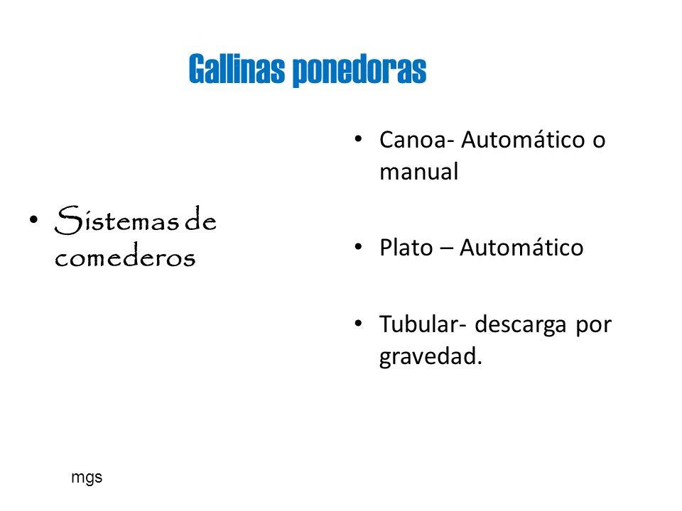 Gallinas ponedoras Sistemas de comederos Canoa- Automático o manual Plato – Automático Tubular- descarga por gravedad. mgs