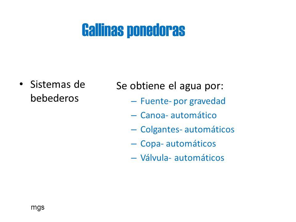 Gallinas ponedoras Sistemas de bebederos Se obtiene el agua por: – Fuente- por gravedad – Canoa- automático – Colgantes- automáticos – Copa- automátic