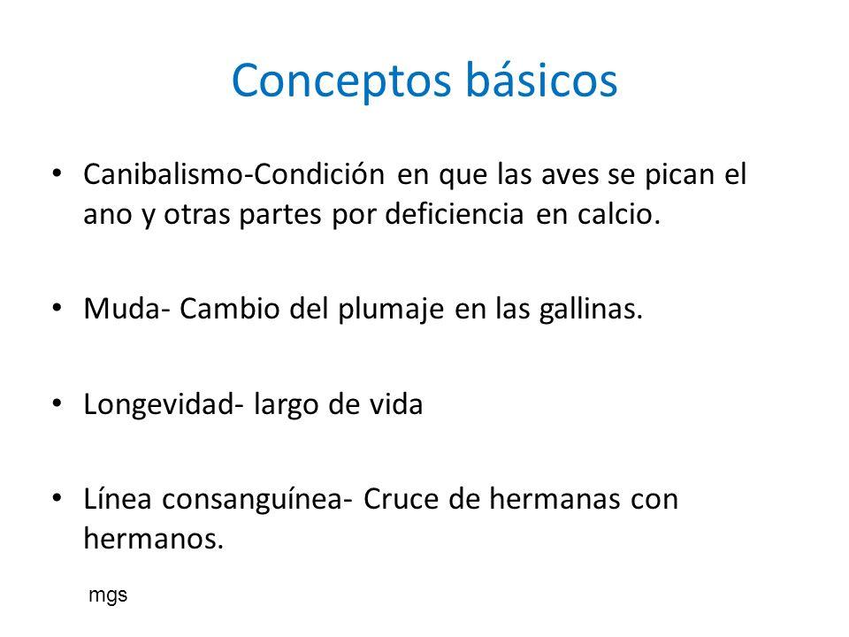Conceptos básicos Canibalismo-Condición en que las aves se pican el ano y otras partes por deficiencia en calcio. Muda- Cambio del plumaje en las gall