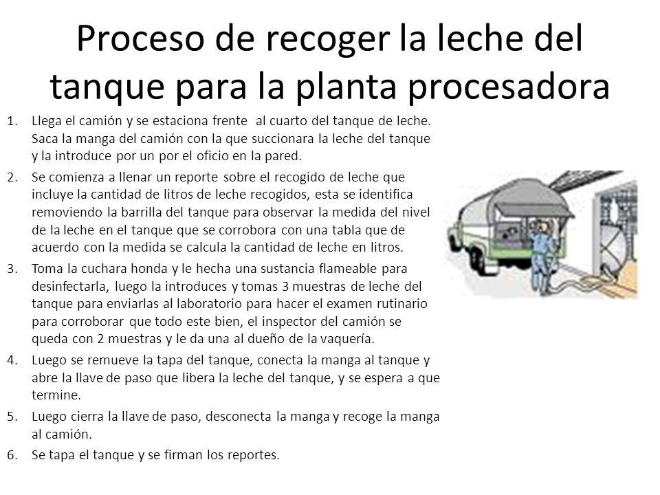 Proceso de recoger la leche del tanque para la planta procesadora 1.Llega el camión y se estaciona frente al cuarto del tanque de leche. Saca la manga