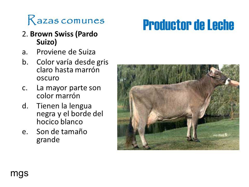 Productor de Leche Razas comunes 2. Brown Swiss (Pardo Suizo) a. Proviene de Suiza b. Color varía desde gris claro hasta marrón oscuro c. La mayor par