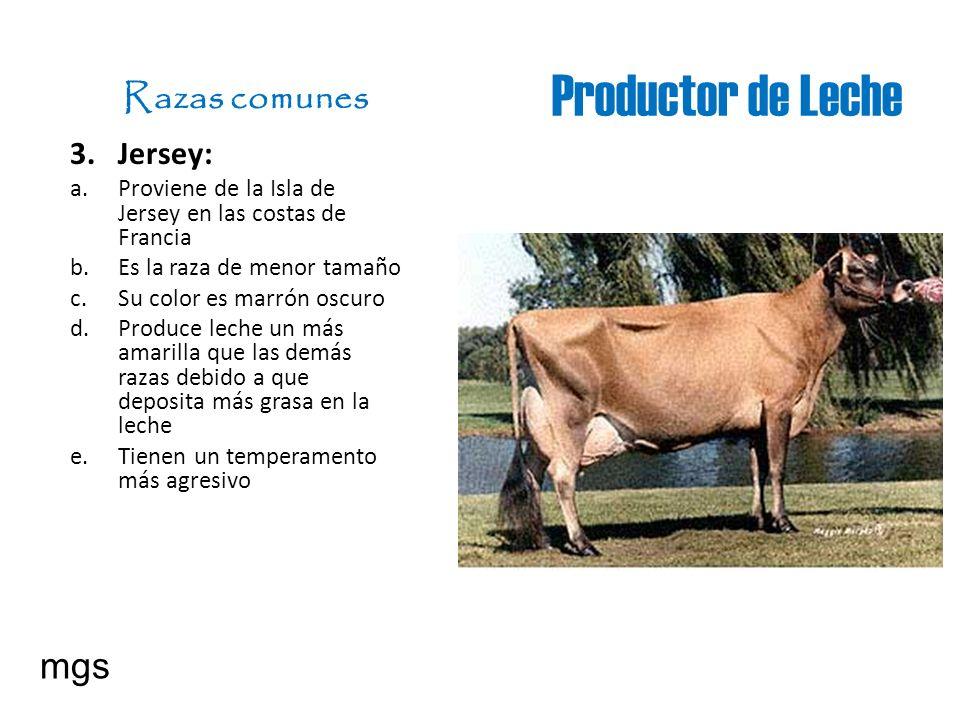 Productor de Leche Razas comunes 3. Jersey: a. Proviene de la Isla de Jersey en las costas de Francia b. Es la raza de menor tamaño c. Su color es mar