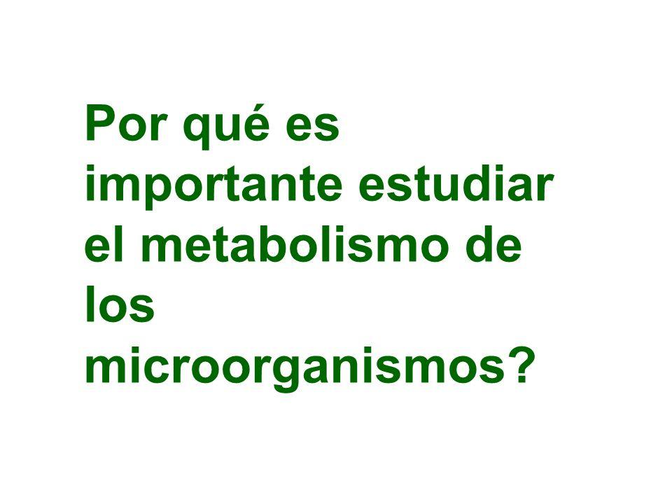 Cianobacterias Nostoc tilacoides lamelas