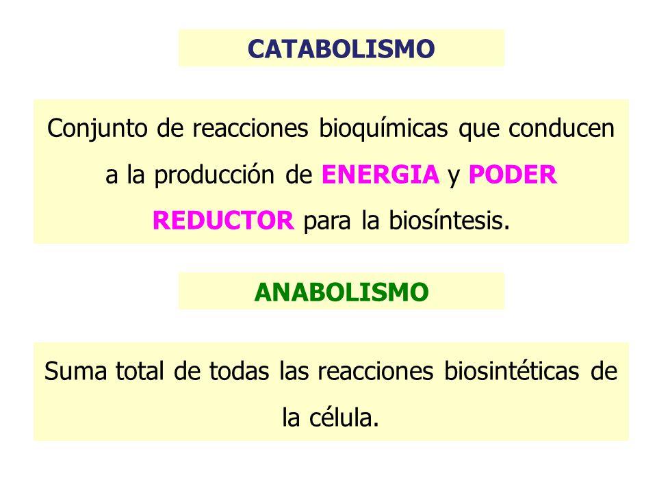 CATABOLISMO - Fermentación - Respiración - Fotosíntesis Rutas para la obtención de energía y poder reductor: