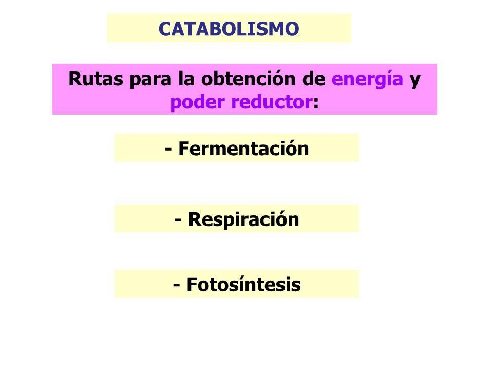 FERMENTACIÓN Son vías catabólicas en las que un compuesto orgánico actúa sucesivamente como donador y aceptor de electrones.