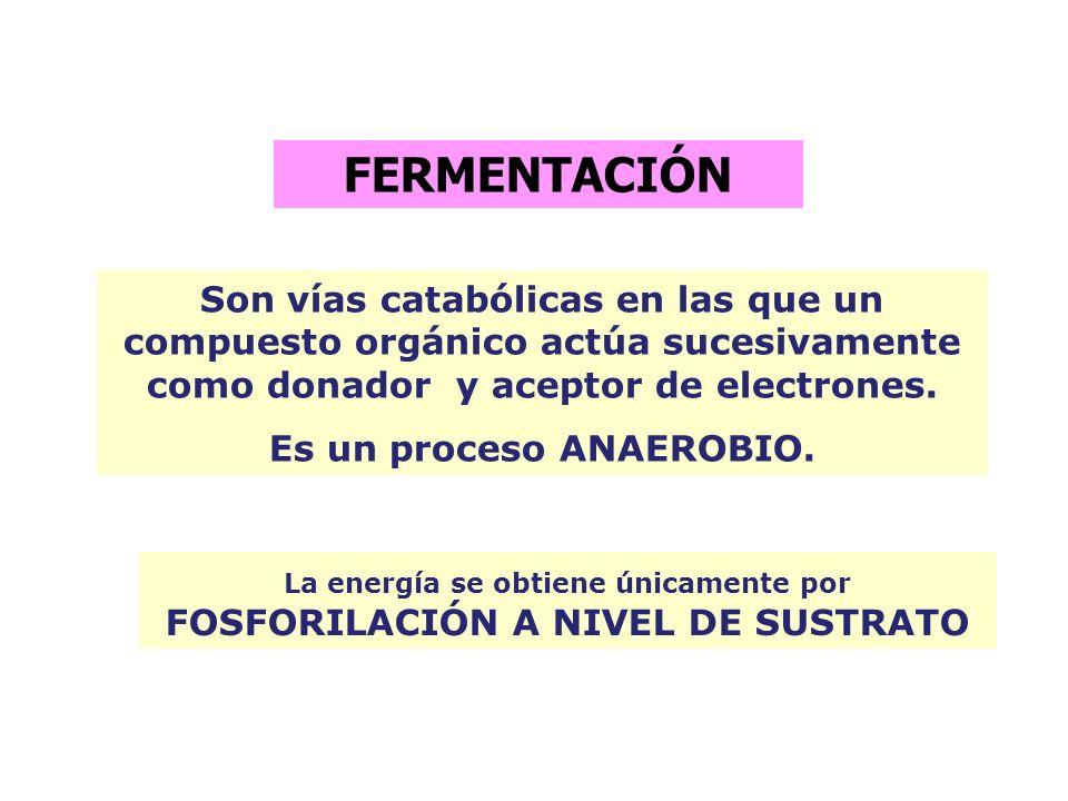 _ La fuerza proton motriz hace posible los siguientes trabajos en bacterias: * movimiento flagelar * transporte de iones a través de la membrana