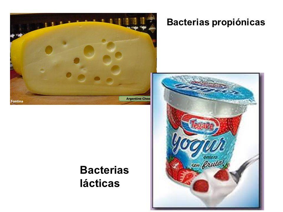 Fotosíntesis oxigénica Cianobacterias