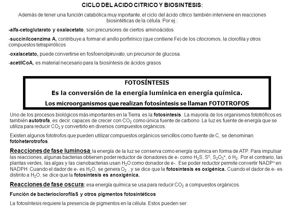 CICLO DEL ACIDO CITRICO Y BIOSINTESIS : Además de tener una función catabólica muy inportante, el ciclo del ácido cítrico también interviene en reacci