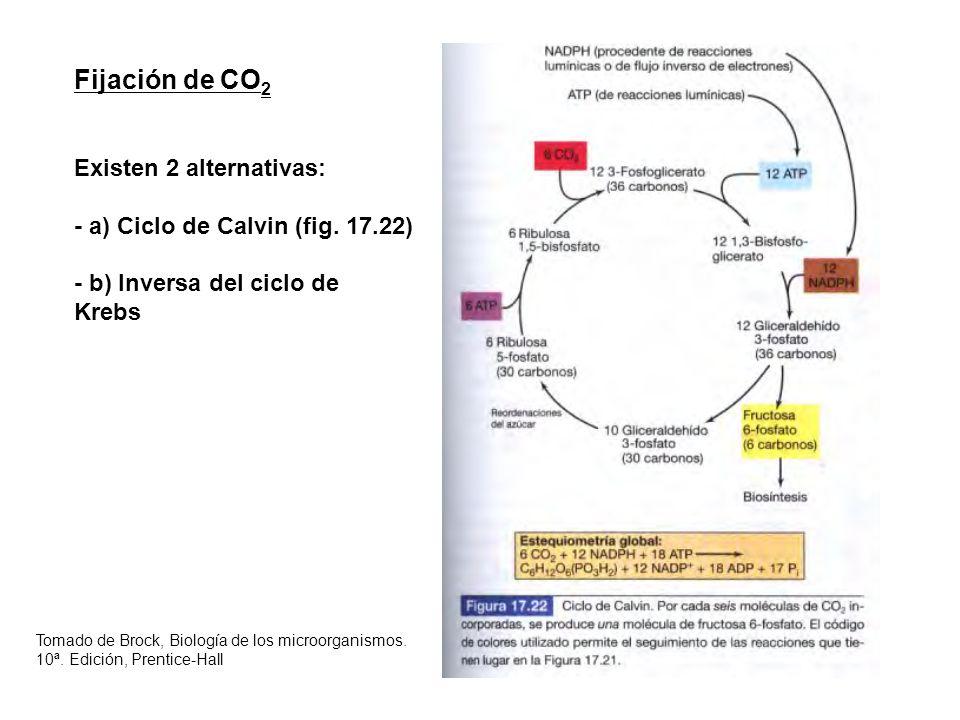 Fijación de CO 2 Existen 2 alternativas: - a) Ciclo de Calvin (fig. 17.22) - b) Inversa del ciclo de Krebs Tomado de Brock, Biología de los microorgan