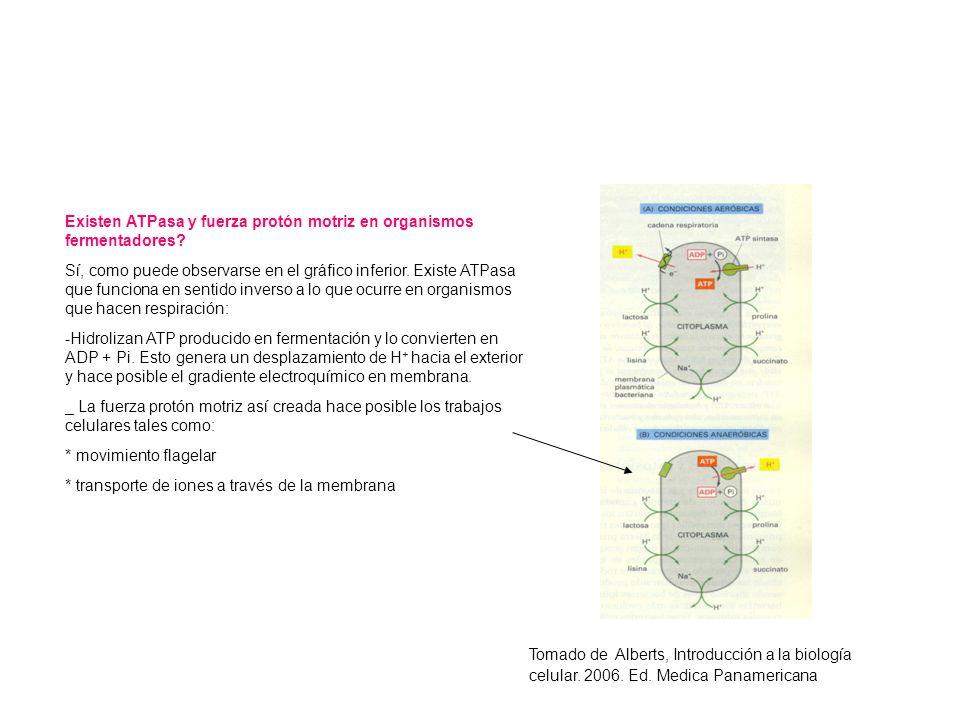 Existen ATPasa y fuerza protón motriz en organismos fermentadores? Sí, como puede observarse en el gráfico inferior. Existe ATPasa que funciona en sen