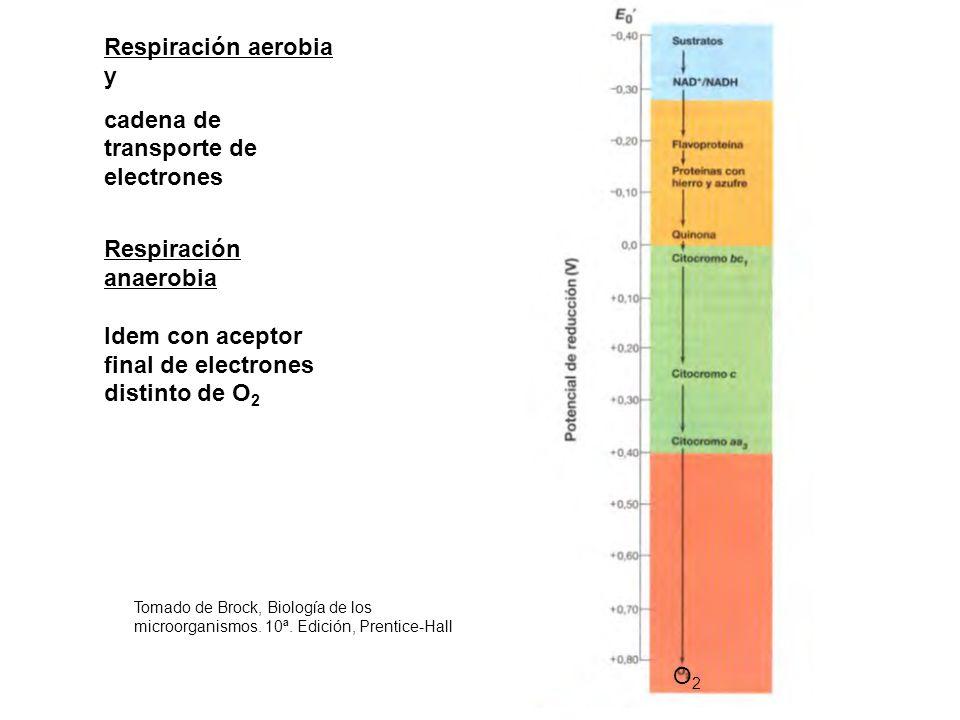Respiración aerobia y cadena de transporte de electrones Respiración anaerobia Idem con aceptor final de electrones distinto de O 2 Tomado de Brock, B