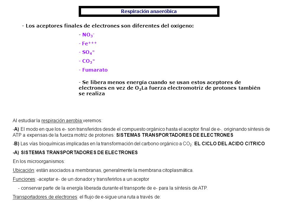 Respiración anaeróbica - Los aceptores finales de electrones son diferentes del oxígeno: - NO 3 - - Fe +++ - SO 4 = - CO 3 = - Fumarato - Se libera me