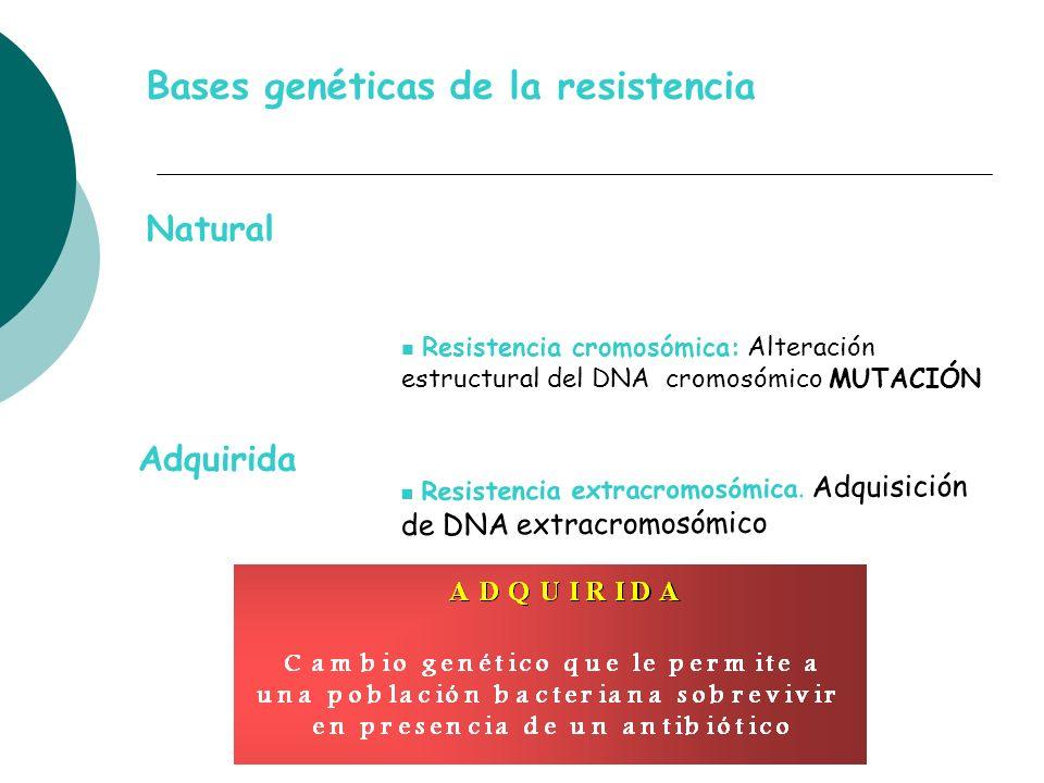 Bases genéticas de la resistencia Resistencia cromosómica: Alteración estructural del DNA cromosómico MUTACIÓN Resistencia extracromosómica. Adquisici