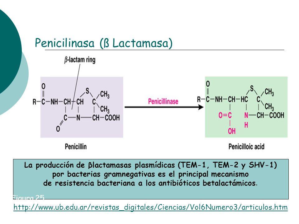 Penicilinasa (ß Lactamasa) La producción de βlactamasas plasmídicas (TEM-1, TEM-2 y SHV-1) por bacterias gramnegativas es el principal mecanismo de re
