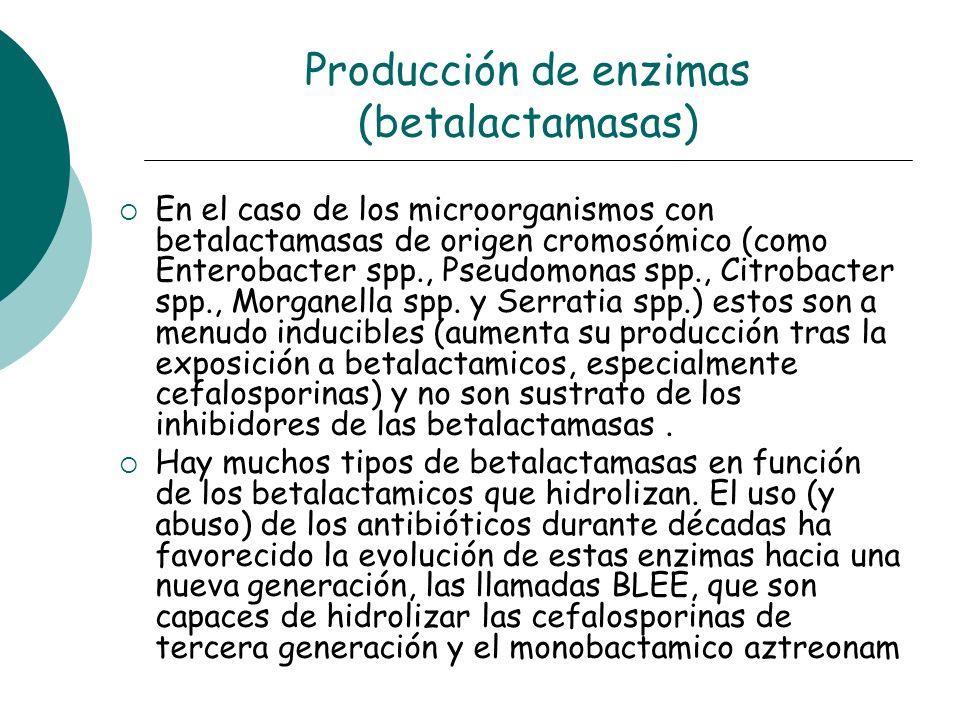 Producción de enzimas (betalactamasas) En el caso de los microorganismos con betalactamasas de origen cromosómico (como Enterobacter spp., Pseudomonas