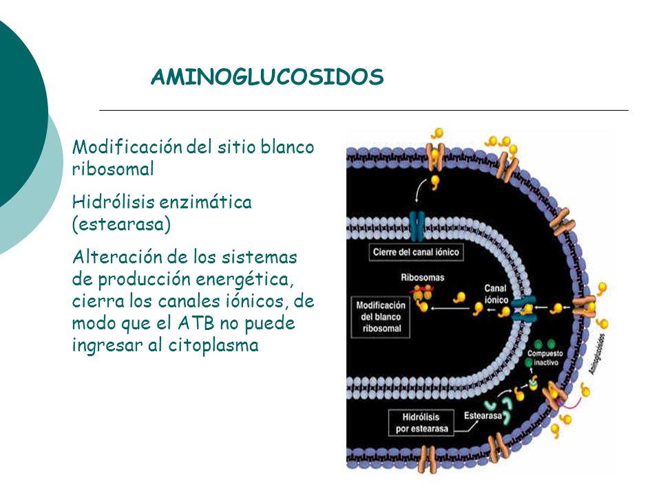 Modificación del sitio blanco ribosomal Hidrólisis enzimática (estearasa) Alteración de los sistemas de producción energética, cierra los canales ióni