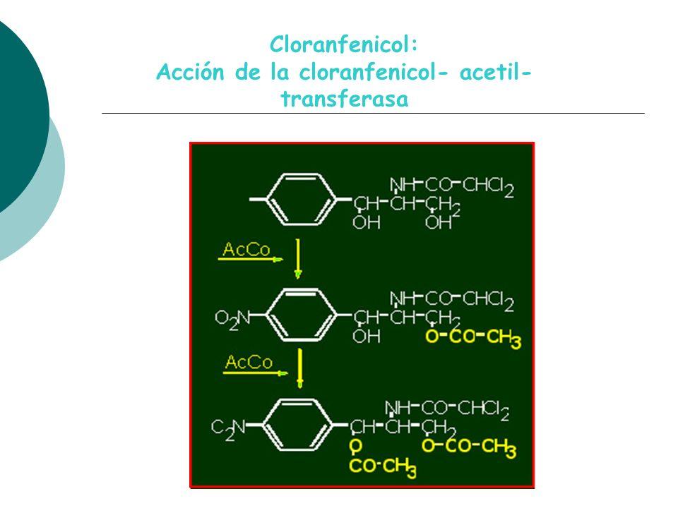 Cloranfenicol: Acción de la cloranfenicol- acetil- transferasa