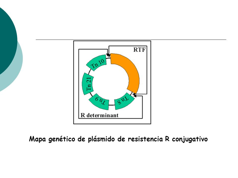 Mapa genético de plásmido de resistencia R conjugativo