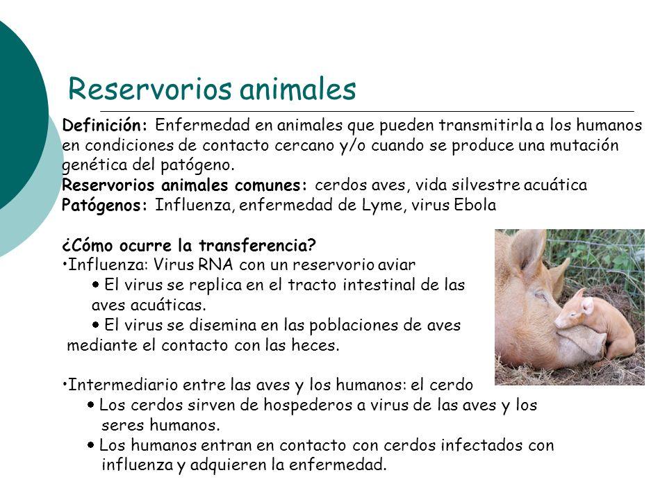 Definición: Enfermedad en animales que pueden transmitirla a los humanos en condiciones de contacto cercano y/o cuando se produce una mutación genétic