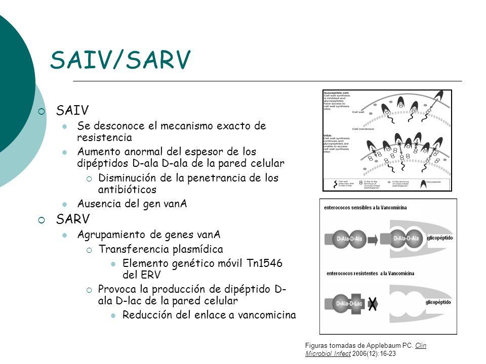 SAIV/SARV SAIV Se desconoce el mecanismo exacto de resistencia Aumento anormal del espesor de los dipéptidos D-ala D-ala de la pared celular Disminuci