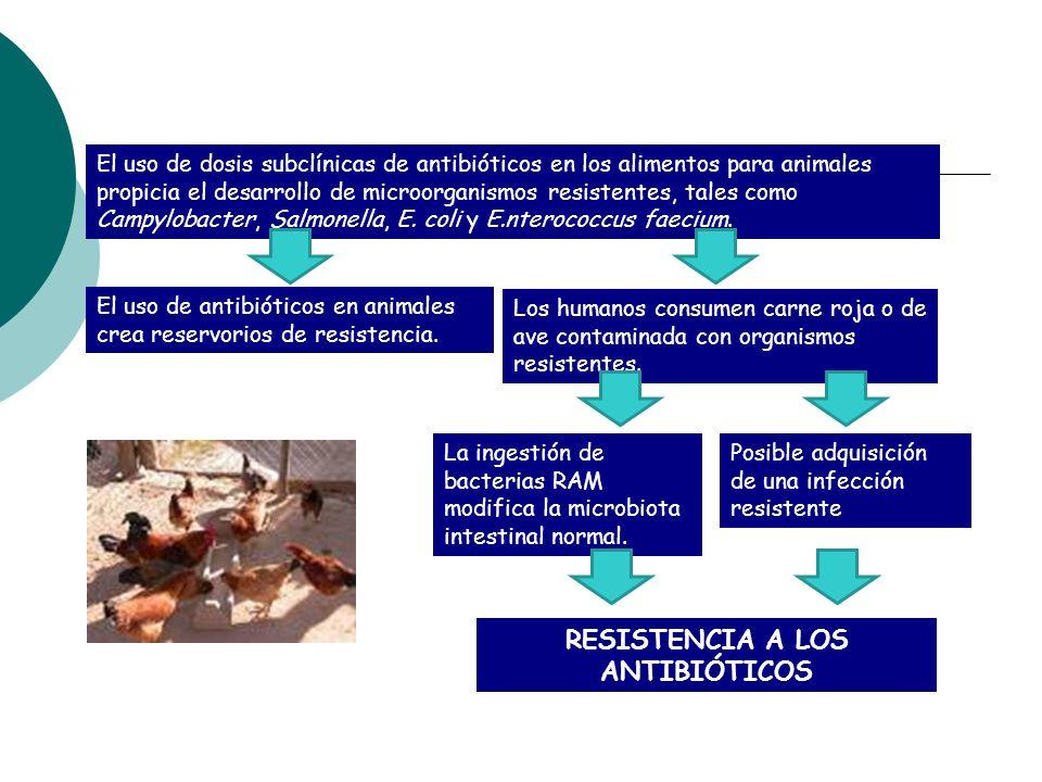 Cría de animales El uso de dosis subclínicas de antibióticos en los alimentos para animales propicia el desarrollo de microorganismos resistentes, tal