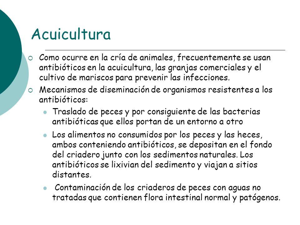 Acuicultura Como ocurre en la cría de animales, frecuentemente se usan antibióticos en la acuicultura, las granjas comerciales y el cultivo de marisco