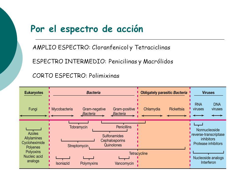 Por el espectro de acción AMPLIO ESPECTRO: Cloranfenicol y Tetraciclinas ESPECTRO INTERMEDIO: Penicilinas y Macrólidos CORTO ESPECTRO: Polimixinas